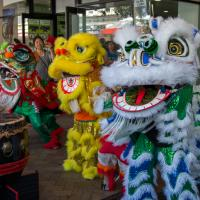 2016 - Chinese New Year Lion Dances